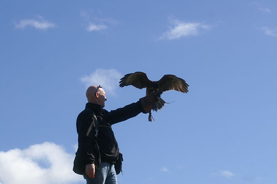 School of Falconry in Ireland
